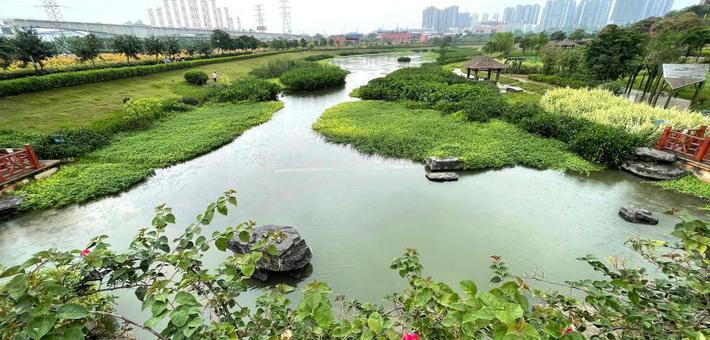 南宁:立夏湿地花木荣