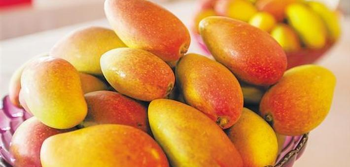 红果黄芒紫桑葚 海南水果季正是踏青采摘时