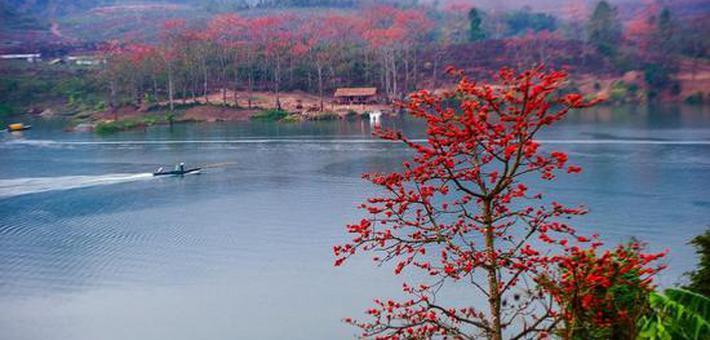 春的红舞鞋跳跃山野间,层林尽染红木棉!