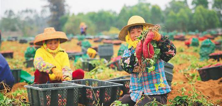 儋州龙头企业领跑 特色农业突围