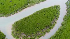 潮起海之南:生态立省谱写美丽中国海南篇章