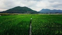 特色农业:从冬天到四季的丰收