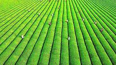 """以品牌创建引领农业增效 打响绿色优质高端""""海南牌"""""""