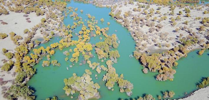 航拍新疆塔里木河生态输水场面