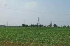 【走向我们的小康生活】沧州吴桥:农业现代新技术 农民走上小康路
