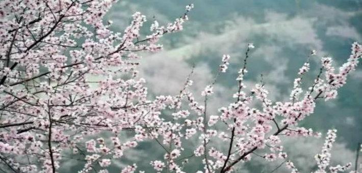 河南赏桃花地图 这些地方花开成海