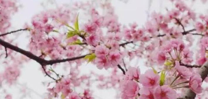 郑州近郊赏花胜地 走进田园春色