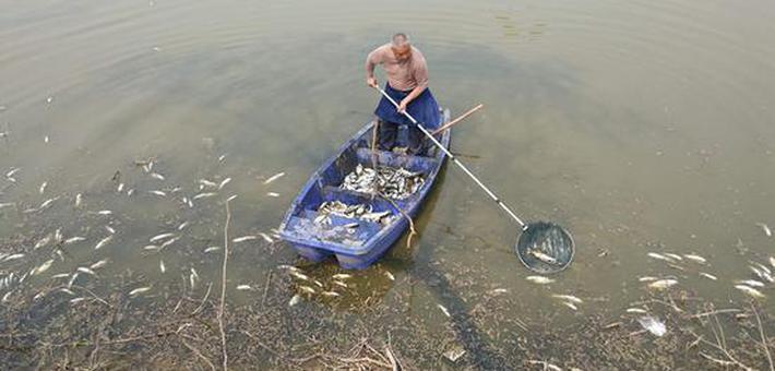 郑州这个湖的鱼儿大面积缺氧死亡