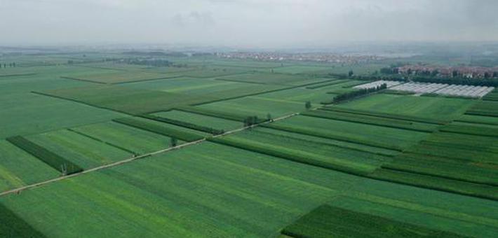 温县:黄河滩区雨后是怎样的一种美