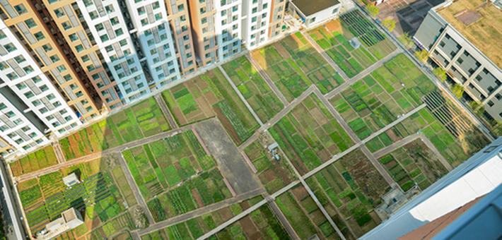 郑州一小区楼顶惊现大片菜园