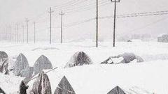 信阳一村庄因暴雪损失严重 上百间大棚倒塌