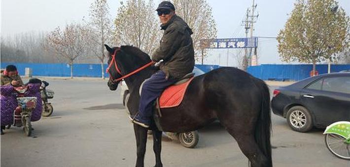 河南七旬都市牧马人:养匹马儿当宠物