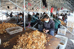 """黑龙江省拜泉县:创建""""四联""""产业扶贫新模式 提升扶贫产业核心竞争力"""