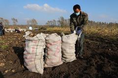 依安县:小土豆带来大收益