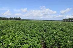 """克山县""""四轮驱动""""助推现代农业高质量发展"""