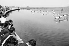 齐齐哈尔市扎龙自然保护区举行40周年纪念活动
