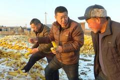 富裕县:积极指导农户科学储粮 确保粮食安全