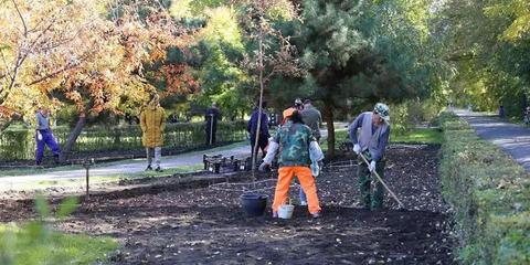 哈尔滨植物园种下35万株郁金香