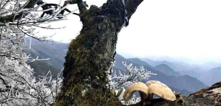 在湘中最高峰感受湖南最早冬天