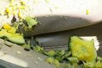 西瓜从15楼坠下砸中轿车 车窗碎裂瓜瓤溅满沙发