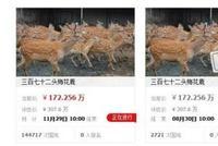 养鹿场租约到期 苏州372头梅花鹿无家可归被拍卖