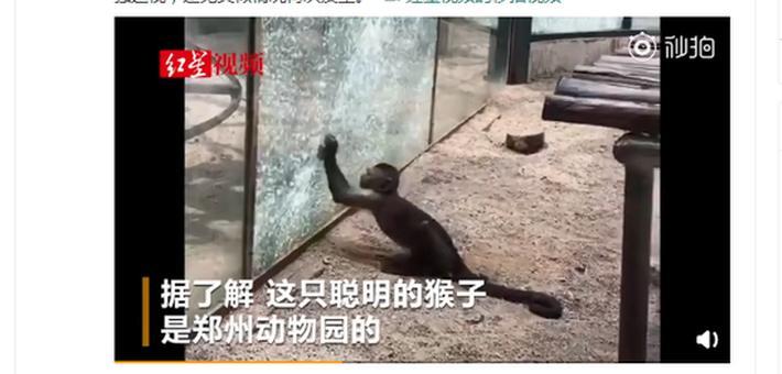 猴子太聪明 用石头砸玻璃想越狱