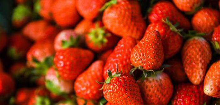 南京周边草莓采摘的好去处