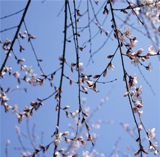 春来撩人赏花好去处