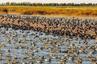 查干湖:打造鱼鸟天堂