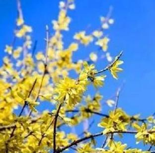 灼灼花开赴春约