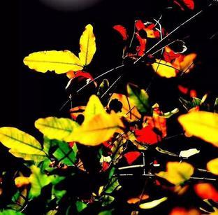 秋意浓浓 生态美景入画来