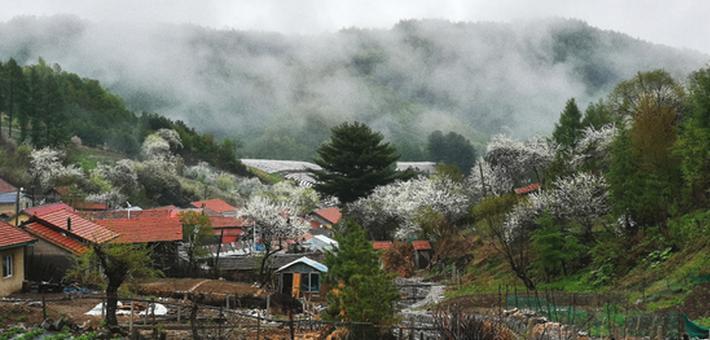 看·白山丨花满松岭有芬芳