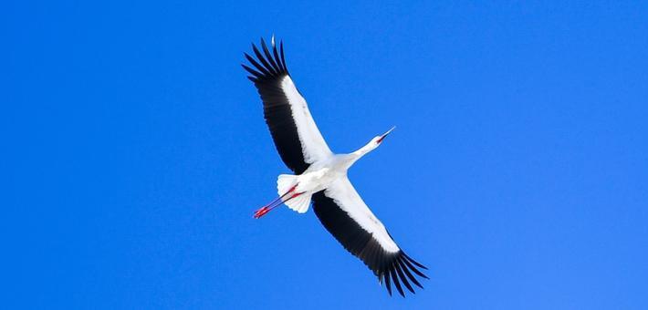伊通河畔飞来超美大鸟