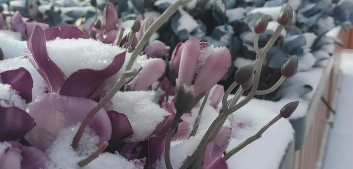 大雪纷至沓来 长春雪景美轮美奂