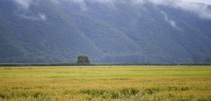 吉林延边:稻谷飘香 收获在望