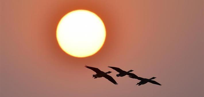 南昌:夕阳渡飞鸟(图)