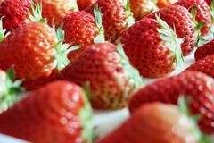 辽宁相册——辽宁土特产 大连庄河草莓:百年种植史