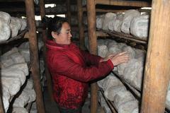 辽宁相册——辽宁土特产 鞍山台安家酱:黄豆的另一种美味发酵