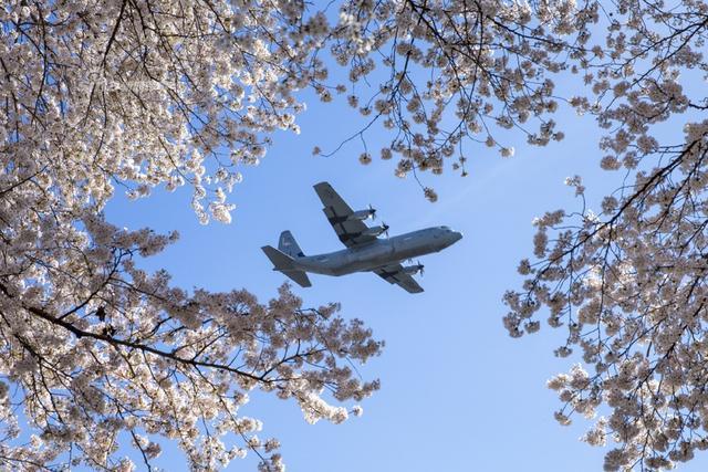 驻日美军C-130低空掠过樱花林