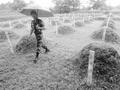 解密韩国归还志愿军遗骸:1954年曾送还1万具遗体