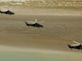 中国正研发新型直10B直升机 将换发动机载弹量猛增