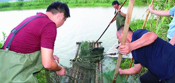 象山清理河道地笼网500余顶