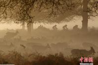 英国里士满公园晨曦如童话世界
