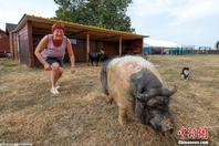 """比利时女子建动物""""养老院"""" 萌宠相处融洽"""