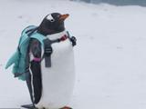 哈尔滨:可爱企鹅亮相冰雪大世界 萌翻全场