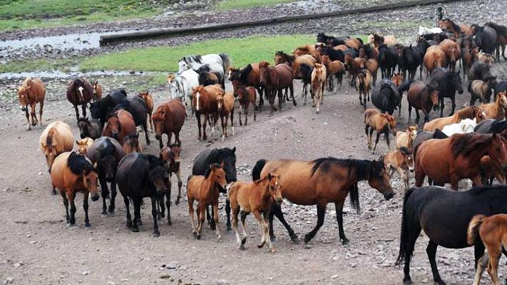 这是世界第一大马场 马匹成群