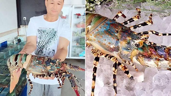 """渔民捕""""神虾"""" 或能卖百万"""