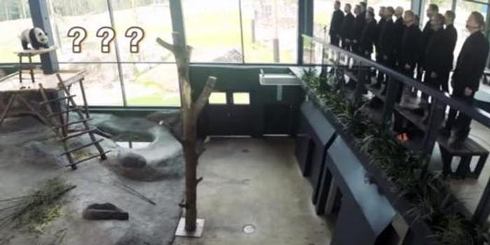 芬兰动物园唱中文歌为大熊猫过中秋?实为七夕视频