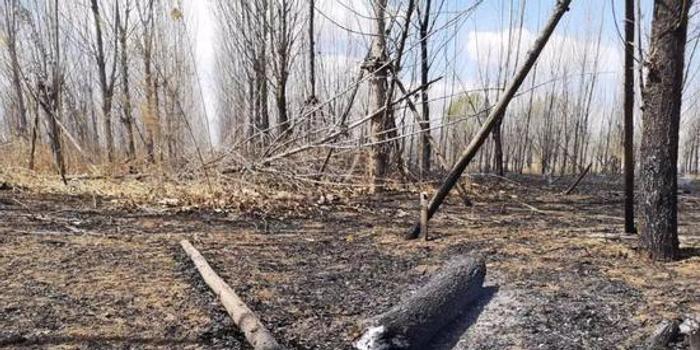 什么是网赚_百棵小树数十个大棚被烧 这样扫墓就能祭奠亲人?