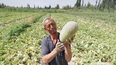 村淘S2B2C模式:用阿里大数据帮农民做精品农业